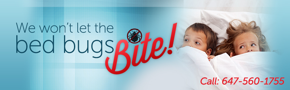 Bed bug control solutions in Markham.
