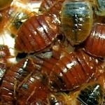 Bed-Bug-Population